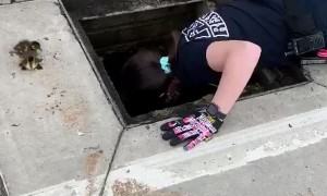 Firefighters save a group of baby ducks stuck in storm drain