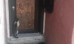 Cat Knocks on Door