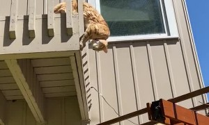 Kitty's Eaten to Much to Escape