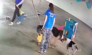 Dog Goes Potty in Mop Bucket