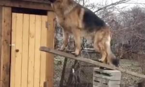 Very Still Dog Balances Stick