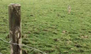 Australian Shepherd Shows Off Her Hops