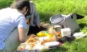 Squirrel Steals from a Picnic