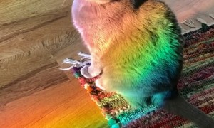 Cat Relaxes in a Rainbow