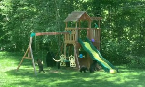 Family of Bears Having Some Playground Fun