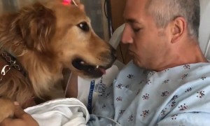 Loyal dogs protecting and caring for their owners