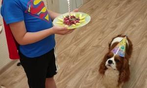 Birthday Celebration For Family Dog