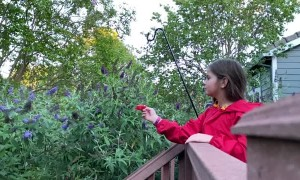 Little Girl is a Hummingbird Whisperer