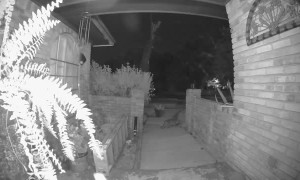 Feral Cat Ding Dong Ditching Doorbell
