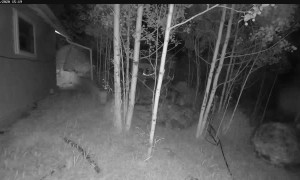Bear Gets up Close and Personal With Security Camera