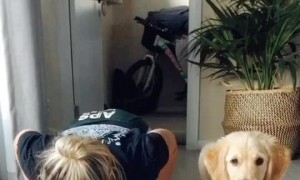 Pup Does Push-ups with His Person