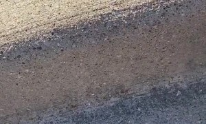 Ducklings Get Curbside Pickup
