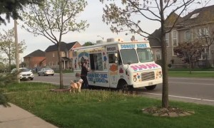 Patient pup waits his turn at the ice cream truck