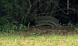 Bobcat Spotted in Muskogee