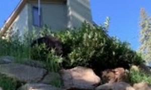 Crazy close bear encounter right outside Colorado home