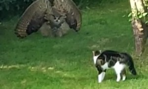 Owl Intimidates Cat With Impressive Display