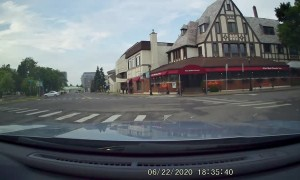 Skunk Family Using Crosswalks in Niagara Falls