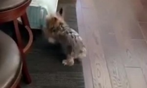 Dog vs Door