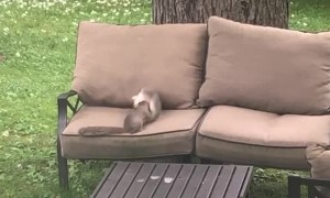 Squirrels Feud For The Nut
