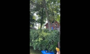 Rope Swing Snaps Halfway Through
