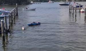 Dog Enjoying Remote Control Boat Ride on the 4th