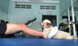 Doggy Helps With Daily Exercise