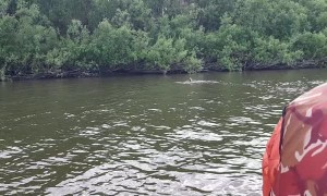 Saving a Falcon Trapped in a River