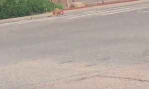 Officer Unable to Avoid Deer on Highway