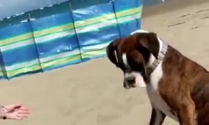 Sneaky Human Hides Ball Under Sand