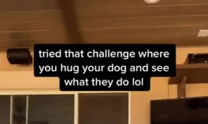 tried that challenge when you hug your dog and see what they do