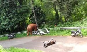 Wild Elephant Runs Over a Moped