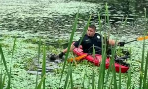 Cops commandeer kayak to rescue dog neck-deep in pond muck