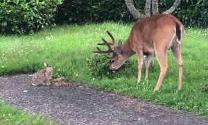 Deer and Rabbit Frolic Together in the Garden