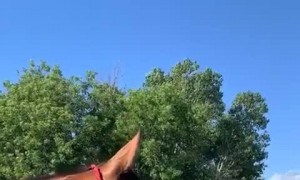 Horse Has a Hoarse Whinny