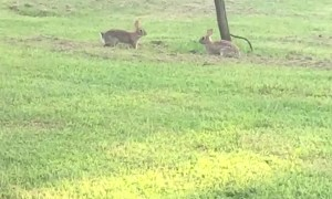 Bunnies Having a Great Time in the Grass