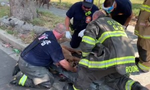 Firefighters revive dog rescued from burning house