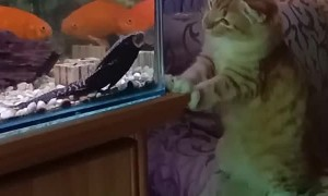 Aquarium Fishing