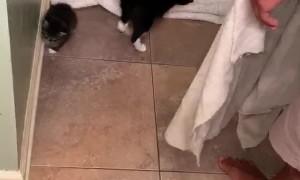 Cat Earns its Keep