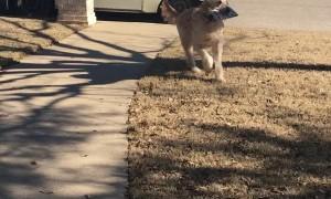 ReggieCarl Retrieving The Mail