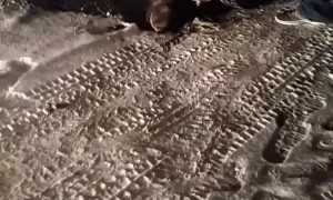 Moose Gets Stuck Under a Truck