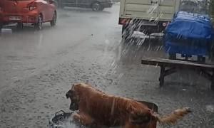 Happy Pooch Plays in the Rain