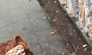 Monkey Slips and Falls Over After Taking a Treat