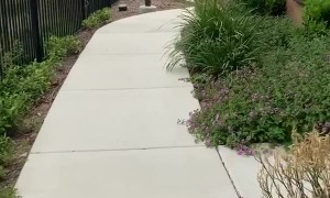 Doggy Gets Super Excited to See Park