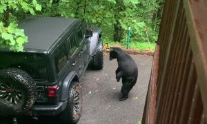 Dad Voice Works to Scare Bear Away
