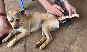 Guy Gives Dog Haircut