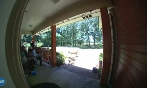 Spooked Deer Smashes Through Door