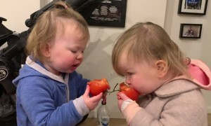 Twins Giggling While Munching on Tomatoes