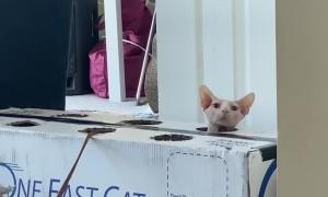 Wack-A-Meow