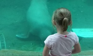 Walrus Gives Girl a Kiss