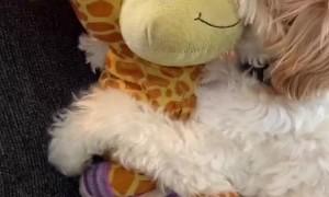 Gilbert and His Girlfriend Susie the Giraffe